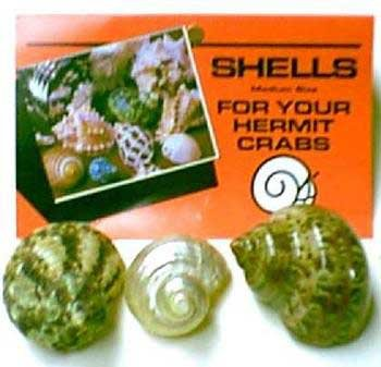 Packaged Shell - Medium - Assorted ()