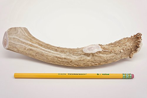 ONE (1) Piece Jumbo/Extra Large Deer Antler Chew Bone for Dogs, 9″ – 11″ Long, for XL/Large Dogs 50-90 pounds, Made in The USA from Wild Colorado Deer Antlers (Extra Large Jumbo) For Sale