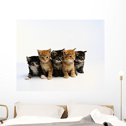 Five Tabby Kittens Wall Decal by Wallmonkeys | Peel and Stick Graphic | 48