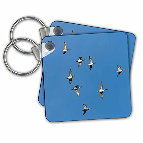 Danita Delimont - Bosque del Apache - American wigeons and northern pintails flying, Bosque del Apache NWR - Key Chains - set of 2 Key Chains (kc_251262_1)