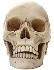 D DOLITY Lifesize 1:1 Realistic Human Skull Replica Resin Model Prop Craft