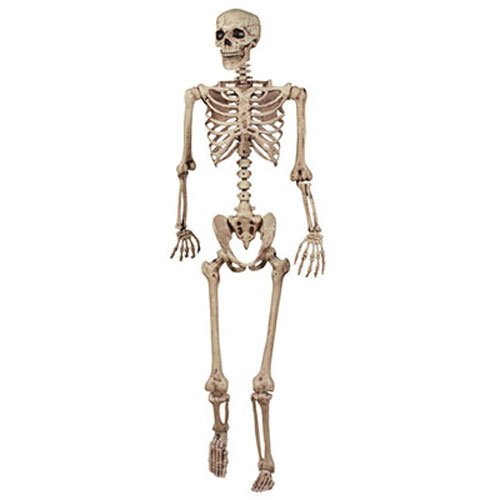 Forum Novelties 18965 5' Pose N Stay Skeleton, 5', -