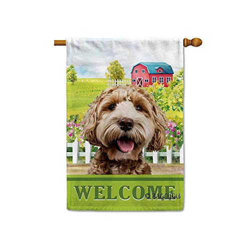 BAGEYOU Welcome A Lovely Dog Labradoodle in The Country for sale  Delivered anywhere in Canada