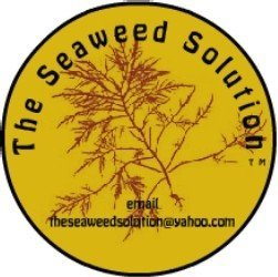 The Seaweed (Agar Agar) Solution Original, All Natural, Tea Flavor (28 - 16 Ounce Servings (For Large Appetite Suppression)) / Weight Loss