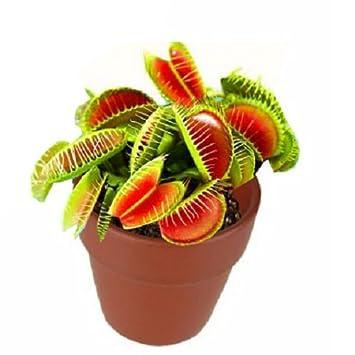 plante carnivore en ligne