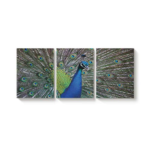 Arts Language 3 Piece Canvas Wall Art Painting for Office Bedroom Living Room Home Decor,A Peacock is in His Pride 3D Animal Pattern Pictures Modern Artworks,20 x 28in x 3 Panels