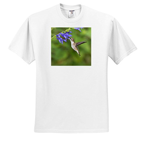 3dRose Danita Delimont - Hummingbirds - Ruby throated Hummingbird at Blue Ensign Salvia, Marion CO, Illinois - T-Shirts - White Infant Lap-Shoulder Tee (24M) (TS_279006_69)