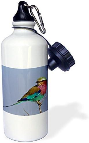 Angela G Lilac Breasted Roller Bird Maasai Mara Kenya Af21 Aje0784 Adam Jones Sports Water Bottle 21 Oz White Stainless Steel Water Bottle Amazon Co Uk Sports Outdoors