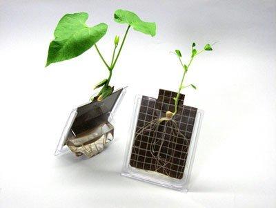 Seed Germination Kit