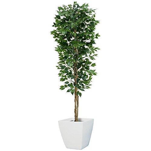 210cmフィカス(ベンジャミン) ツリー(L)(ナチュラルトランク)【インテリアグリーン(天然木と造花のコラボ)】《ポット(鉢)は別売りです》(NGT2017L10) B00IM41N8O