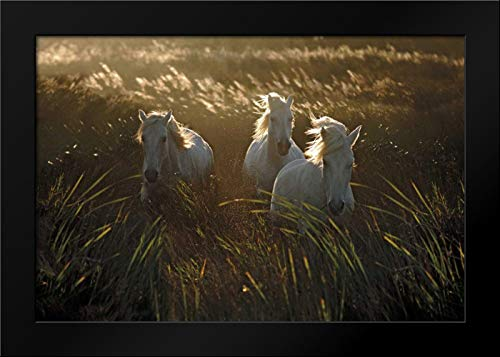 Wild and Free 40x28 Modern Black Wood Framed Art Print by Ortega, Xavier