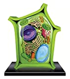 Plant Cell Assembly Model Anatomical Model Brain Game Educational Toys