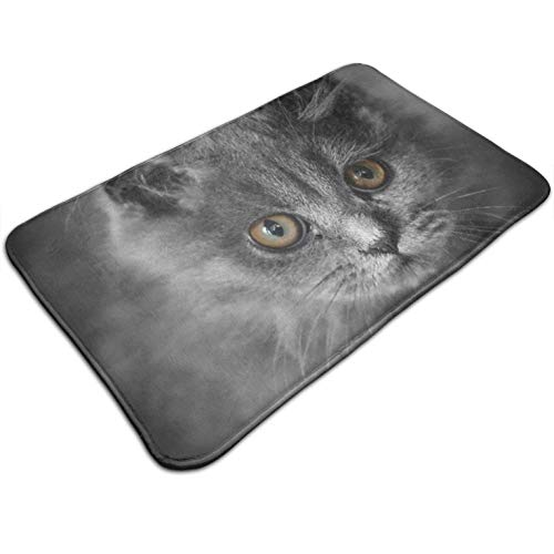 (Tuoneng Cats Animals Kittens,Kitchen Carpet Rug Door Mat Rug for Bathroom Outdoor Porch Laundry Living Multifunction Doormat (19.5