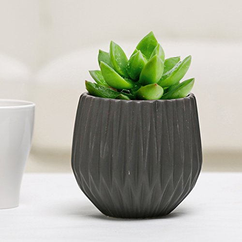 Modern Ceramic Planter, Small Round Garden Plant Container Pot, Black (Black Garden Pots Ceramic)