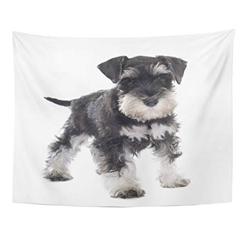 CANCA Premium Tapestry Black Puppy Miniature Schnauzer in Front of Dog Pet Home Decor Wall Hanging for Living Room Bedroom Dorm 60x80 Inches