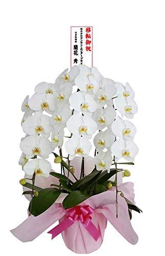 胡蝶蘭販売Net 大輪花33輪以上ラッピングと花上紙製立て札付きの胡蝶蘭。期日指定いただけます。 開店祝いなどにご利用ください。 B079CCJ987