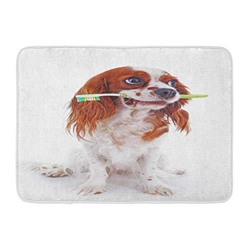 YGUII Doormats Bath Rugs Outdoor/Indoor Door Mat Dog Toothbrush Cavalier King Charles Spaniel Beautiful Cute Puppy on White Studio Trained Pet Photos Bathroom Decor Rug Bath Mat 16X23.6in (40x60cm) ()