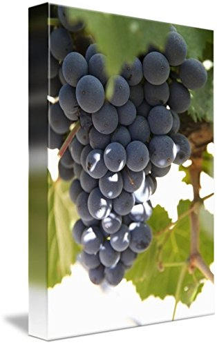 Imagekind Wall Art Print entitled Malbec Grapes On The Vine, Cafayate, Salta, Argent by Design Pics | 32 x 48 Argentine Malbec