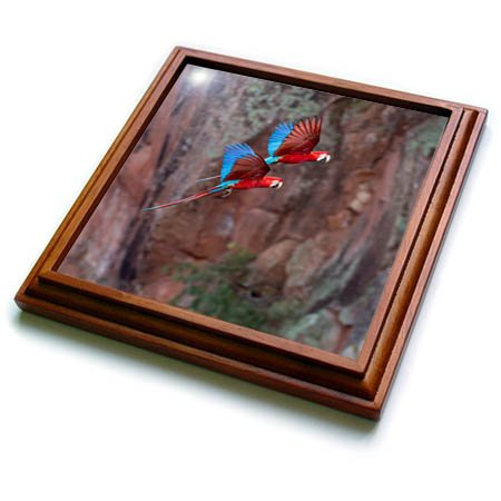 3dRose Danita Delimont - Parrots - Brazil, Mato Grosso do Sul, JardimRed and green macaws flying in shade - 8x8 Trivet with 6x6 ceramic tile -