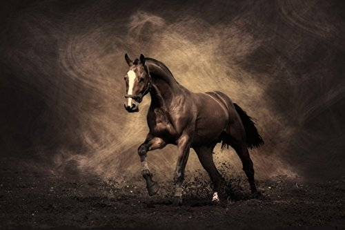 Fine horse - Nature Poster Canvas Art Print (24x16inch)