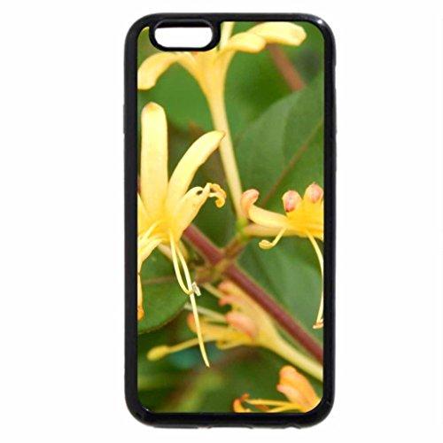 iPhone 6S / iPhone 6 Case (Black) Honeysuckles
