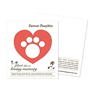 Paw Print Pet Memorial Bracelet Gifts - Pet Lovers Charm Bracelet for Women, Jewelry Bag & Flower Seed Plantable Gift Card, Helps Support Rescue Dogs & Cats - Furever Pawsitive
