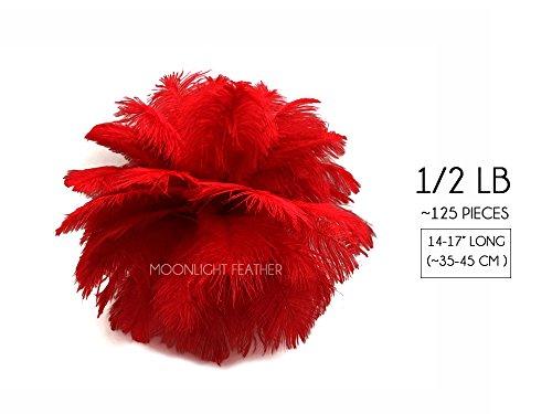 Moonlight Feather | 1/2 lb - 14-17