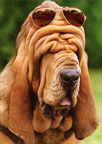 (Droopy Face Hound - Avanti Funny/Humorous Dog Father's Day Card)