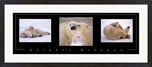 Nature's Kingdom-Polar Bears Framed Art Print Wall Picture, Espresso Brown Frame, 43 x 19 inches