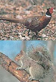 Delta Tru-Life Paper Targets - Pheasant/Squirrel