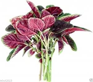 "Leafy Vegetables,Amaranth Seeds""Red Beauty""CHINESE SPINACH Yin Cho or Callaloo !"