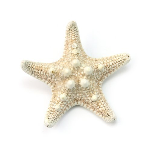 Small Pretty Natural Starfish Lightweight Hairpin Women Sea Star Hair Clip Beige by Tayongpo