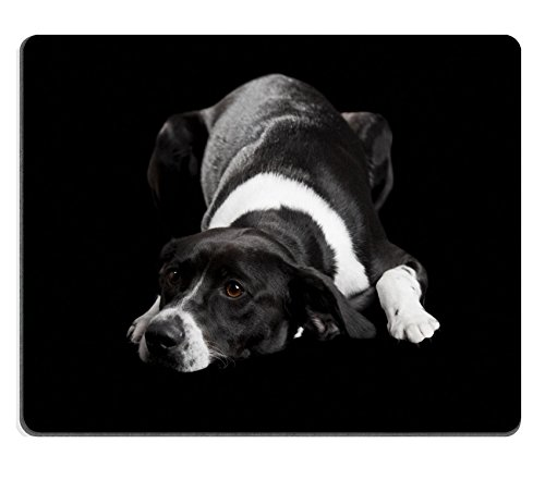 Price comparison product image MSD Mouse Pad Natural Rubber Mousepad Mousepad IMAGE ID: 8647405 Beautiful dog lying on the floor with a sad look isolated on black