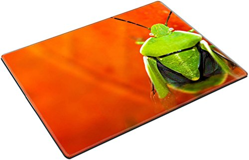 MSD Place Mat Non-Slip Natural Rubber Desk Pads design 32722164 Green Stink Bug on the Red Leaf Macro Photography (Stink Bug Long)