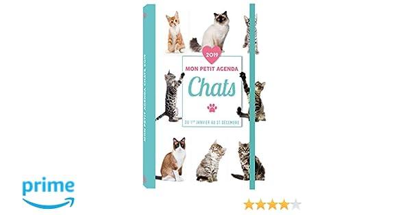 Mon petit agenda Chats 2019: Amazon.es: Collectif: Libros en ...