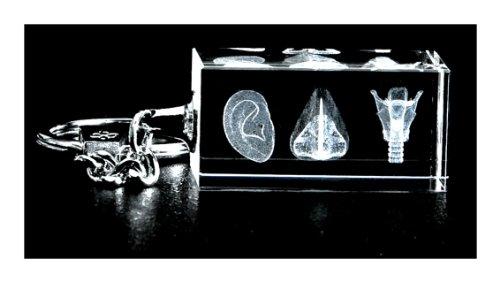 ENT Three Image 3d Laser Key Chain Crystal, Otolaryngologist Anatomy, Ear, Nose Larynx -