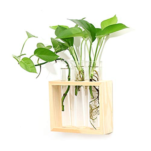 Glass Flower Tubes - Ivolador Wall Mounted Hanging Planter Test Tube Flower Bud Vase Tabletop Glass Terrariumin Wooden Stand Perfect for Propagating Hydroponic Plants Home Garden Wedding Decoration