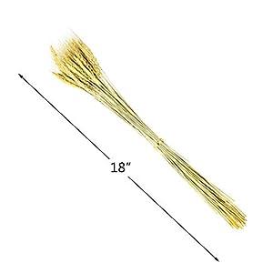 BeautyMood 60PCS Golden Dried Natural Wheat Sheave Bundle, Wheat Bundle Dry Grass Bouquet Premium Fall Arrangements DIY Home Kitchen Table Wedding Flower Bouquet Centerpieces Decorative 3