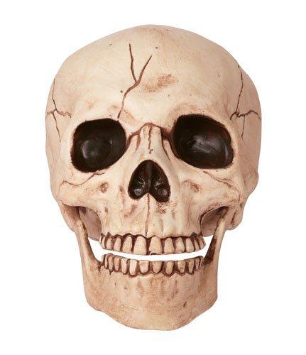 Crazy Bonez Skeleton Skull (Skull Halloween Prop)