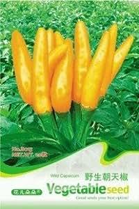 venta caliente 5pcs semillas de melón kiwano, Cucumis metuliferus, pepino africano semillas vegetales del jardín de DIY