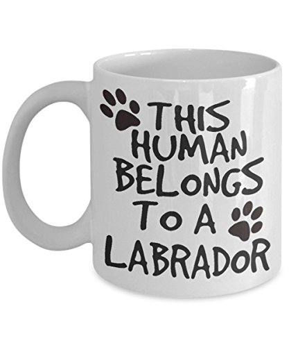 This human belongs to a labrador
