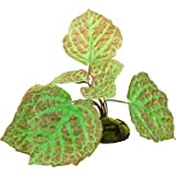 Zilla 09618 5-Inch Tropical Series Terrarium Plant, Rajah Begonia