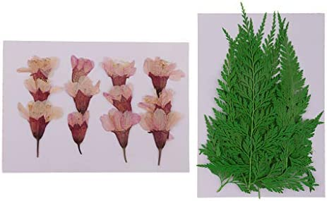 freneci 24枚の葉、天然ドライフラワー、スクラップブッキングカード作成用