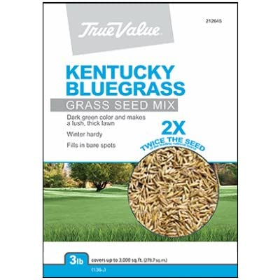 Barenbrug USA TVKBG3 TV 3 lb Kentucky Bluegrass Seed : Garden & Outdoor