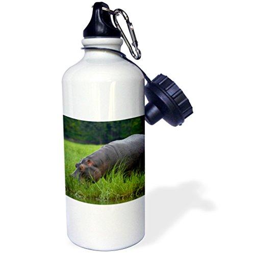 3dRose Hippopotamus and Cattle Egret, River, Chobe NP, Kasane, Botswana-Sports Water Bottle, 21oz (wb_187913_1)), 21 oz Multicolor