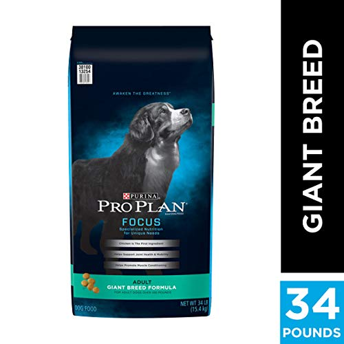 Best Dog Food For Saint Bernards