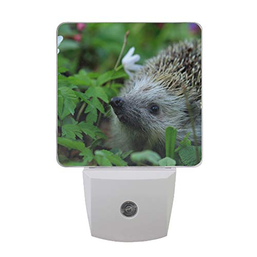 Auto ON/Off Plug in LED Night Light with Dusk to Dawn Sensor Urchin Spines Grass Flowers