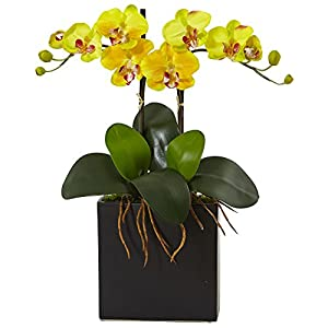 Nearly Natural Double Mini Phalaenopsis Silk Orchid in Black Vase Yellow 32
