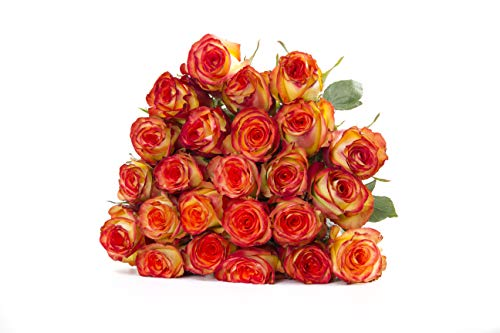 (Martha Stewart Roses by BloomsyBox - Two Dozen Red & Yellow High & Magic Roses Selected by Martha and Hand-Tied, Long Vase Life)