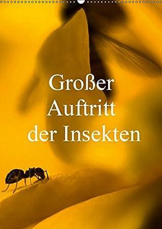 Großer Auftritt der Insekten Wandkalender 2019 DIN A2 hoch ...